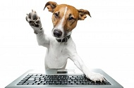 dog with keyboard