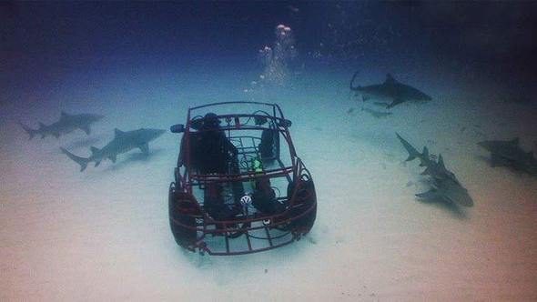 Driving with Sharks
