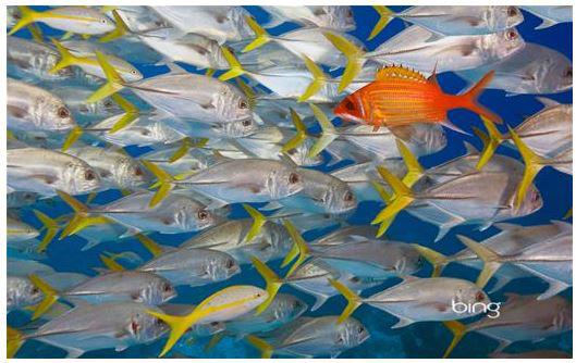 Bing Fish